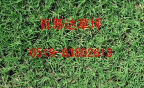 供应草坪/马尼拉草坪/矮生百慕大/中华结缕草坪