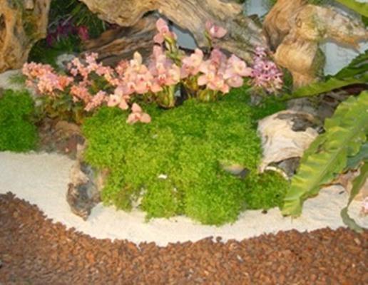询价留言  详情介绍 松宝树皮是用于园林绿地装饰的有机材料