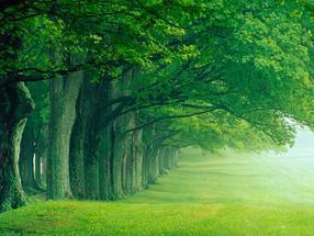 大树营养液等养护资材