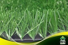 足球运动草坪(单丝草)