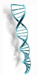 RNA干扰服务/RNAi服务