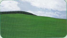 高羊茅草种,高羊茅种子,草坪种子,灌木种子,绿化边坡种子