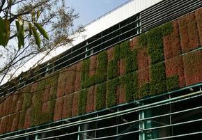 立体绿化 植物墙室外墙体绿化 绿墙工程