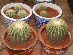 陶化营养土—盆花种植,屋顶花园