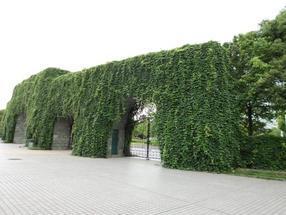 广州植物墙分享墙面绿化的选材原则