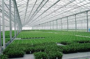 玻璃温室大棚生态餐厅