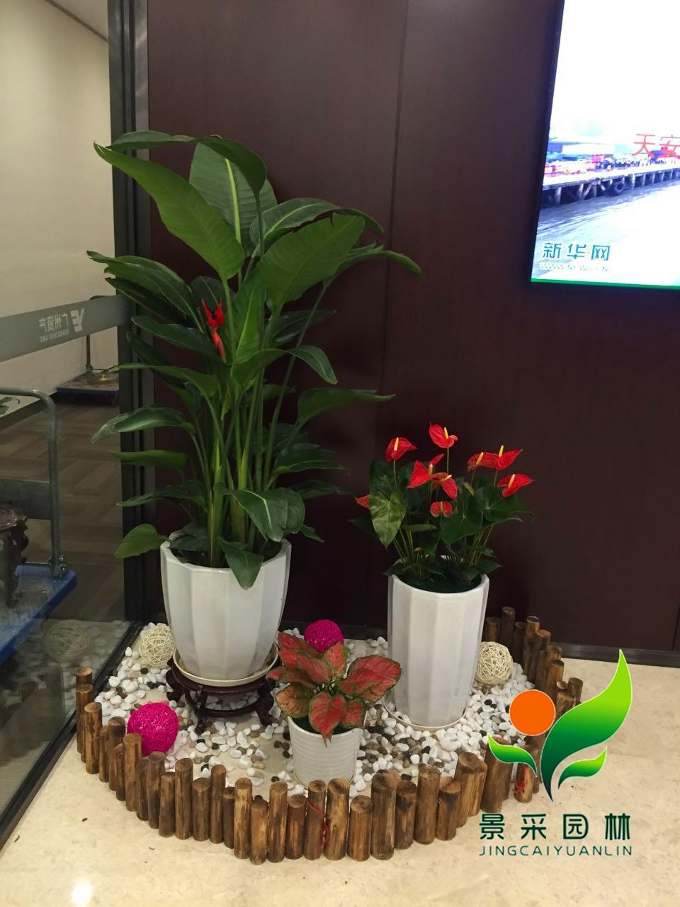 阴面办公室养什么植物