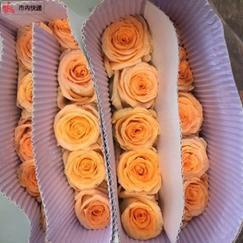 官渡玫瑰花价格/昆明鲜花商城sell/新亚洲玫瑰花