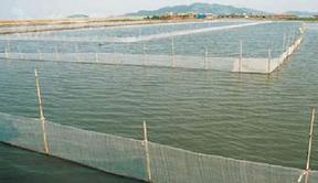 养殖废水处理流程yklc高温烧结微电解填料