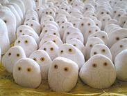 GAB426白色大理石猫头鹰雕刻