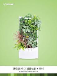 西安花卉网植物墙