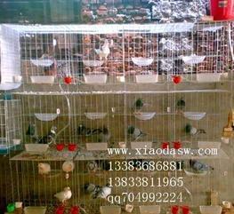 养殖笼具,鸡鸽兔笼,养殖设备