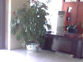成都市植物租赁
