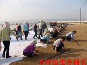 湘潭市植生带铺设,植生带厂家