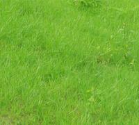 草种/灌木种子/花种