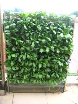 立体蔬菜种植机