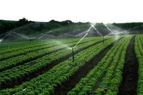 银川园林绿化公司