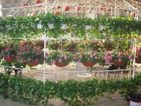 出售各种花草树木、盆栽、植物、花卉、苗木、花木(佛山)