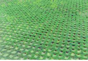 固绿格植草地坪