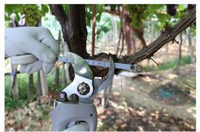 电动修枝剪 充电修枝剪价格 果树修枝剪型号