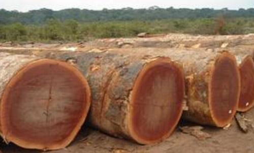 这些树种的原木和板材在外观上都很相似,但价格能差很多.