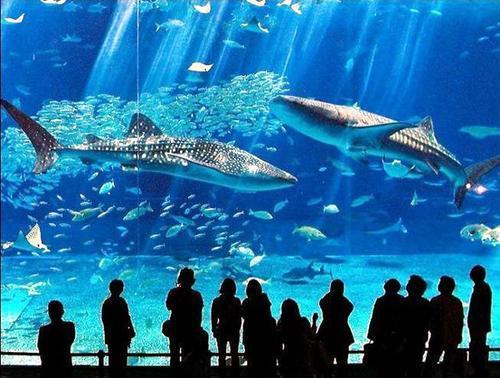 壁纸 海底 海底世界 海洋馆 水族馆 500_378