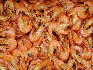 青岛khg-02海产品烘干机价格 温伴小虾虾米烘