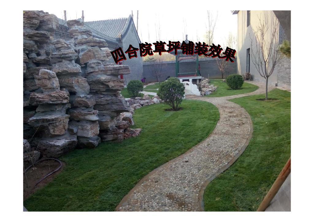 北京京郊草坪销售