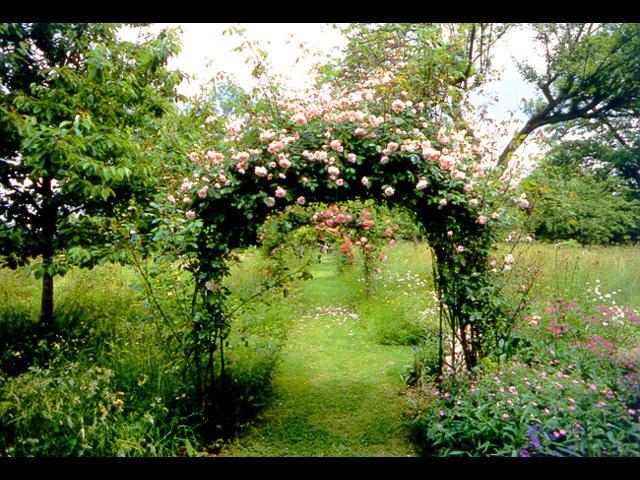 专业庭院绿化设计,园林绿化,别墅庭院绿化设计,私家花园设计,假山图片