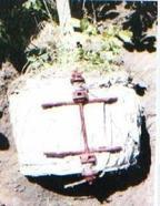 多季树木移植器(大树移植器,大树移栽器);