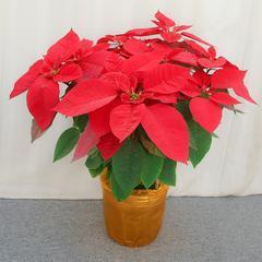 武汉办公室绿植租摆绿植价格,室内盆栽办公室鲜花报价