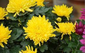 广州盆栽出租会包含有哪些运转植物品种呢