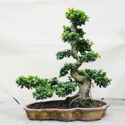 武汉室内花卉植物租摆办公室植物租摆,武汉办公室花卉租摆