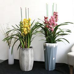 武汉植物租赁公司办公室内大型植物花卉盆栽出租养护