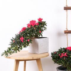 武汉光谷步行街花卉租摆租赁,武汉室内写字楼花卉盆栽出售