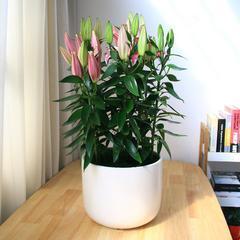 武汉工厂花卉报价商场苗木购买,武汉单位鲜花报价户外绿植出租