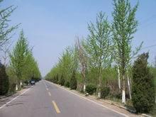 大量供应各种绿化苗木室内盆景15153923686