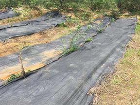 3米宽120克园林防草布多少钱一平米