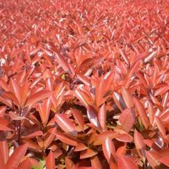汉阳办公室植物出租/雅淳花卉sell/汉口园林绿化