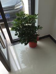 花卉租赁、绿植租摆、植物租赁、盆栽出租