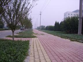 山东道路绿化设计,园林绿化设计,潍坊丽景园林苗木120090318