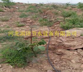 阜平县PE管生产厂家 保定市梨树果树滴灌毛管价格