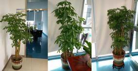 提供佛山地区租花、租植物、租花卉、租花木、租花草服务