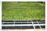 连云港供应韩国电地暖农用大棚、育苗室专用地热
