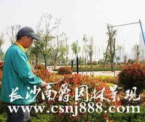长沙园林绿化养护