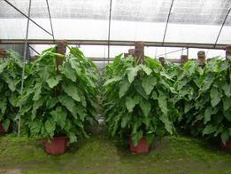 各种室内绿化植物盆栽盆景出售和出租(佛山市)