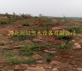 阜平县果树滴灌毛管 保定市果树滴灌工程设计