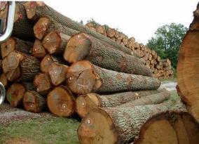 木材杀虫剂灭冲剂杀虫药
