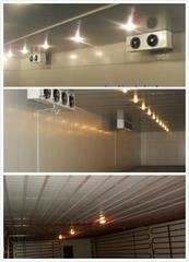 杭州博多2000立方-18度奶精低温冷库