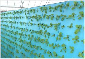 水培种植泡沫板 水培定植高密度海绵 农业蔬菜种植打孔泡沫板厂家